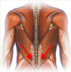 untere rueckenmuskeln