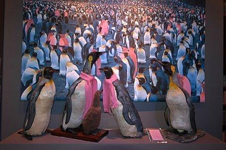 schwule pinguine
