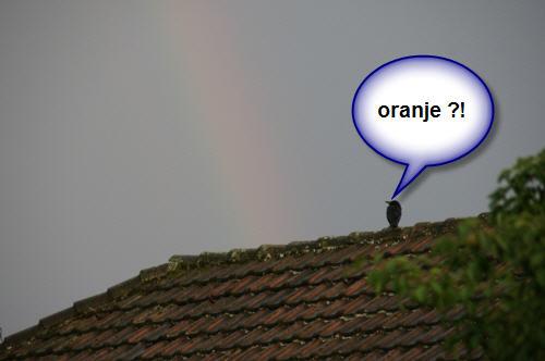 oranje ?!